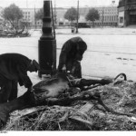 Scavenging a dead horse on Manfred-von-Richthofen-Straße. Bundesarchiv, Bild 183-R77871 / CC-BY-SA